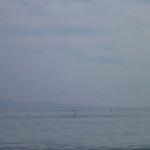Man kan lige ane søløverne der leger med fiskene.