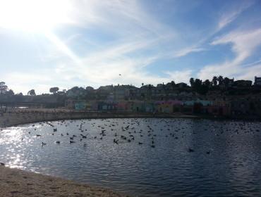 Fuglene nyder ligesom mig det gode vejr, de er dog lidt bedre til at håndtere det kolde vand. Man kan se det fine, farverige motel i baggrunden.
