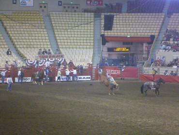 Hest med rumpen godt i vejret