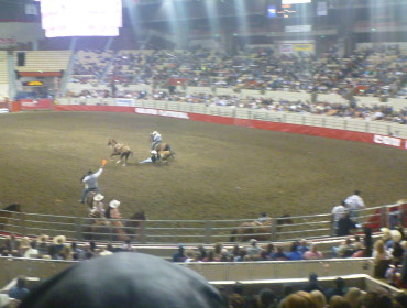I ren begejstring kaster manden sig ned fra sin hest i fuld galop, for at kramme kalv - det er da sødt!