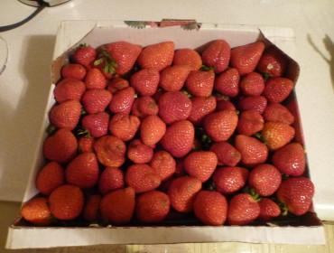 Man kunne også købe jordbær på markedet, og for 6 dollar blev alle disse altså vores.