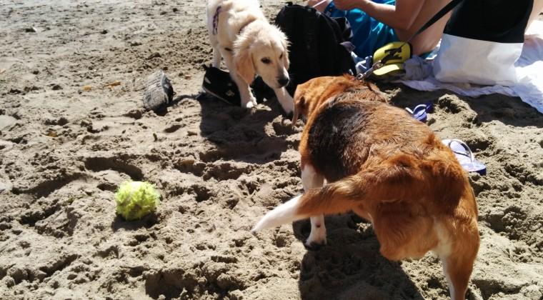 også alle hunde. Som I kan se mangler Emma et ben, Jenna var så sød at tage ham alligevel!