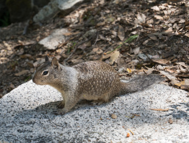 Mange egern! De gad ikke engang klatre helt op af bjerget!