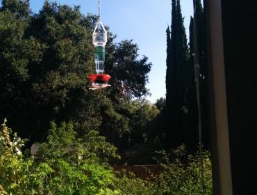 Kolibrierne fodres lige ude foran vinduet
