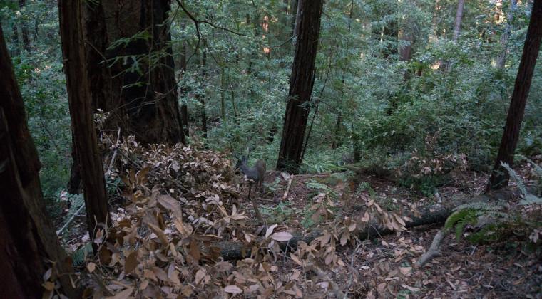 Vi så da lidt vildt i skoven.