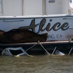 Sælerne hygger sig vældigt i Monterey