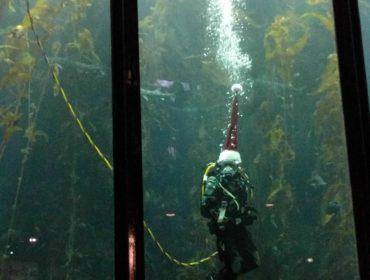 Julefrokost med Apple - stille og rolig i et akvarium.